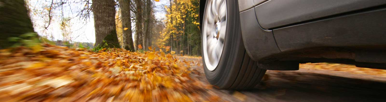 Car Driving in Fall